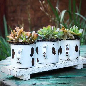 Three succulents plants in tin cups