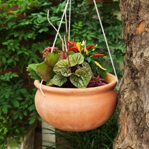 Hanging Bowl Planted Bowl